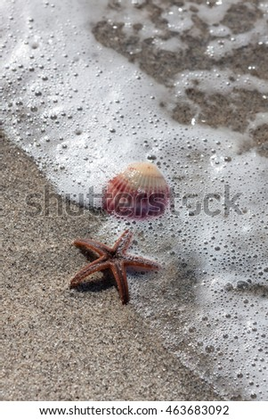 An orange starfish and a pink sea shell on a tropical beach with a wave of bubbles around them.