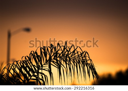An orange sunset looking past a palm tree on a residential street - stock photo