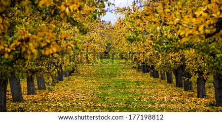 An Orchard in Autumn - stock photo