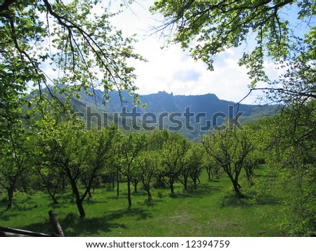 an orchard of the pear trees at mountainous background - stock photo