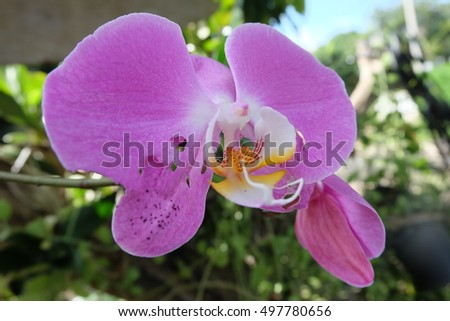 An Orchids tear from Insect
