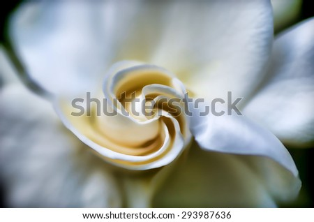An original photograph of a white gardenia bloom transformed into a digital illustration - stock photo
