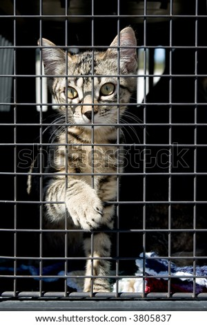 An orphan kitten in a cage, reaching out with one paw. - stock photo