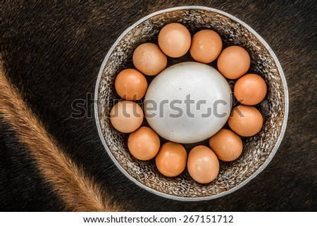An Ostrich Egg in a bowl, surrounded by twelve large chicken eggs, viewed from the top as the bowl is placed on an oryx skin. - stock photo
