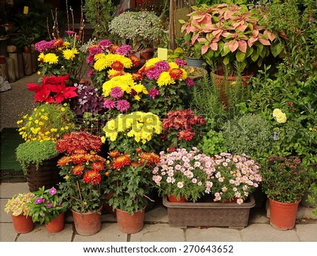 An outdoor flower shop displays a variety of potted flowers and shrubs