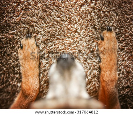 an overhead photo of a dog on a pet bed with his paws out in front  - stock photo