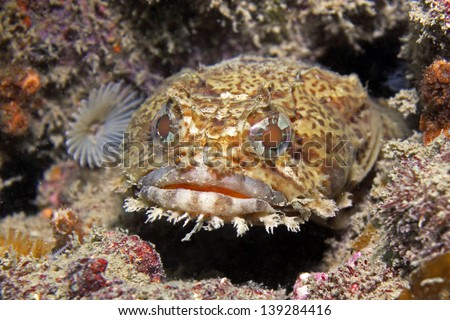 toad fish - photo #17