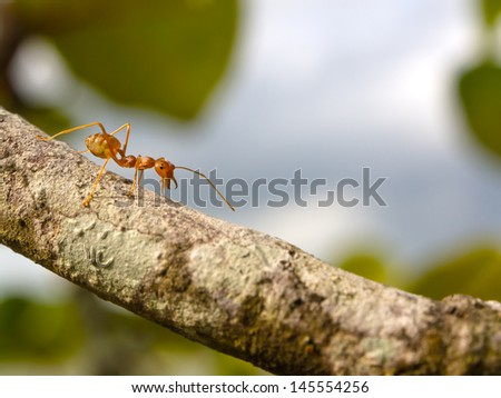 an red ant on branch
