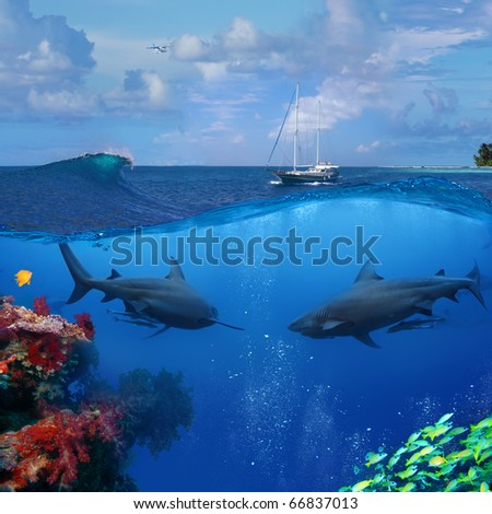 An underwater shot splitted two parts The Bottom One with wild two big bull-shark and beautiful coral reef Top part is cloudy seascape with wooden divers yacht - stock photo