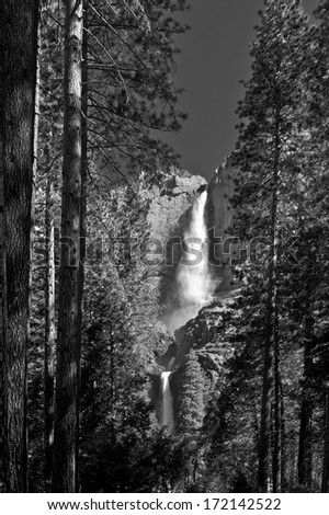 An unusually strong Yosemite Falls as seen through old forest growth. - stock photo