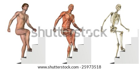 Anatomical overlays depicting a man climbing stairs - 3D render. - stock photo