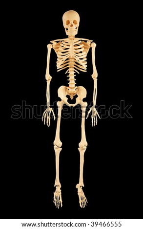 Anatomically correct human skeleton isolated on black - stock photo