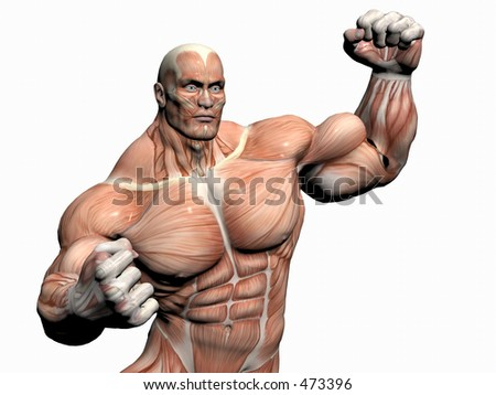 Anatomically correct medical model of the human body, body builder close up. - stock photo