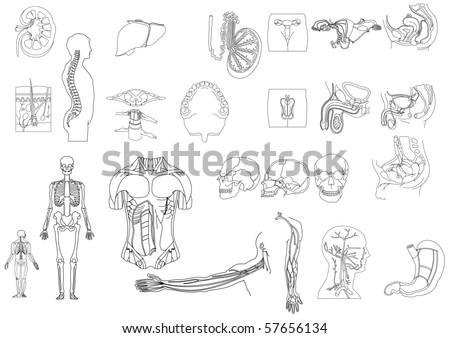 vector illustration skeleton surfer mermaid stock vector