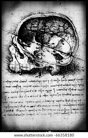 Anatomy art by Leonardo Da Vinci from 1492 on textured background. - stock photo