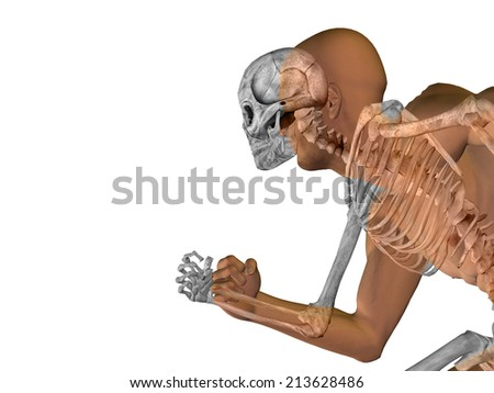 Anatomy concept or conceptual human man body chest,head isolated on background, metaphor to medical, science, health, male, biology, medicine, bone, anatomical, muscular, system, face, cranium, spine - stock photo