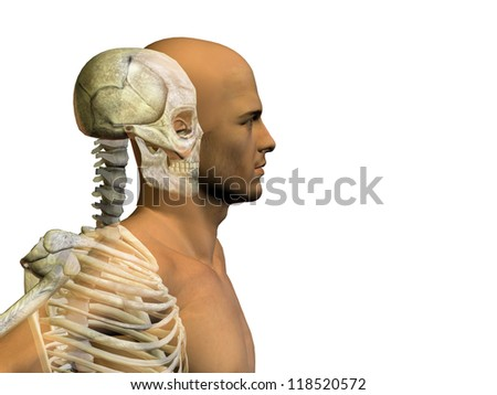 Anatomy concept or conceptual human or man body chest,head isolated on background as a metaphor for medical,science,health,male,biology,medicine,bone,anatomical,muscular,system ,face,cranium and spine - stock photo