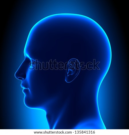 Anatomy Head - Side View - Blue concept - stock photo