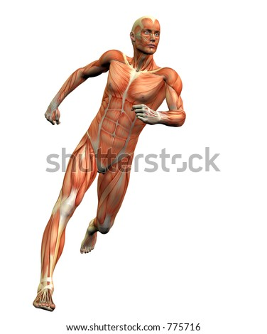 anatomy man #3 w/ clipping mask - stock photo