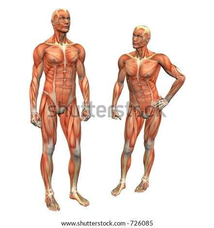 anatomy muscle man standing w/ clipping mask - stock photo