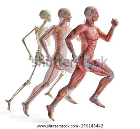 anatomy of a runner - stock photo