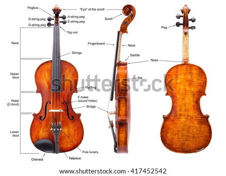 Anatomy of a violin with English labels - stock photo