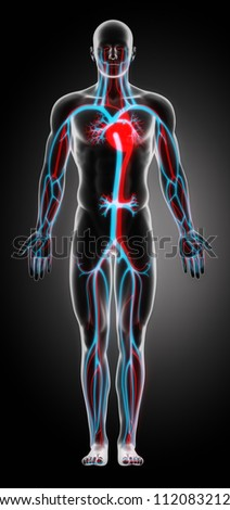 Anatomy of the Cardiovascular System     **** Also as footage available in my portfolio - stock photo