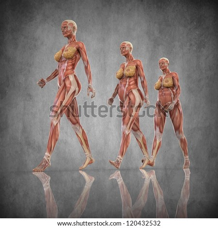 Anatomy Pregnant Woman Stock Illustration 120432532 - Shutterstock