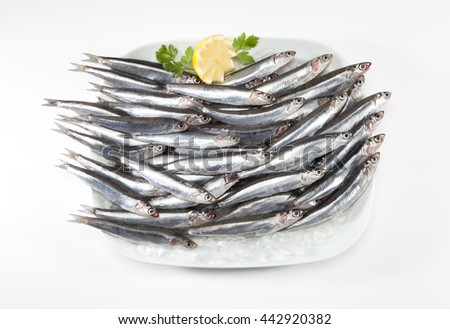 anchovies plate on ice - stock photo