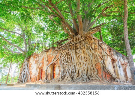 Ancient brick temple with root tree, Wat Sung Kratai, Thailand - stock photo