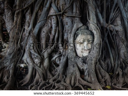 Ancient Buddha statue ruins in tree growth, taken in central Thailand.