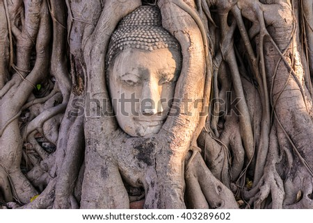 Ancient Buddhism head in root at, Ayutthaya, Thailand