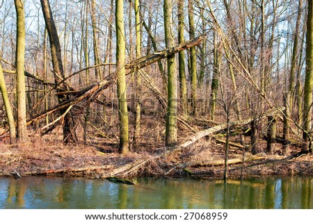 Ancient forest - stock photo