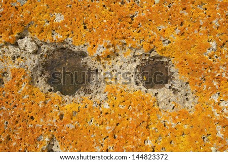 Ancient orange lichens growing on rocks in Centennial Valley near Lakeview, MT - stock photo