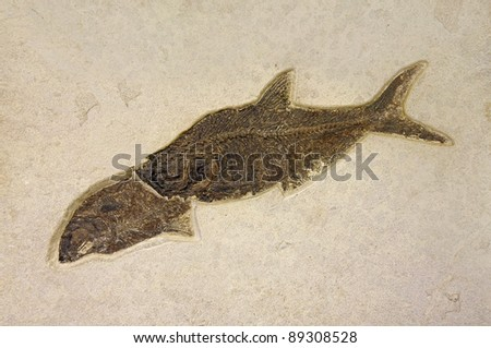Ancient Rock Formation Fish - stock photo