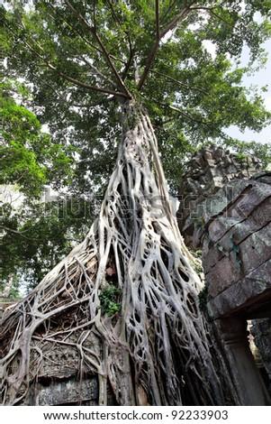 Ancient ruins of Ta Prohm temple at the Angkor, Cambodia - stock photo