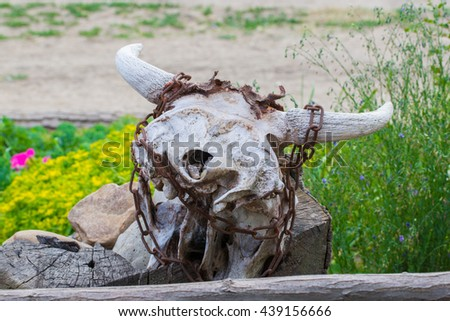 Ancient skull of a bull lying on the ground - stock photo