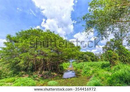 Ancient trees inside the canal in mangrove forest with winding vines on the canal side is beautiful sky makes the scene more beautiful forest and fresh rustic