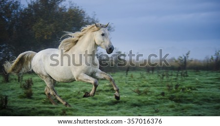 Andalusian horse galloping in the field