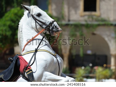 andalusian white horse in jump  - stock photo