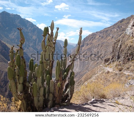 Andes scenery at Colca Canyon in Peru ( South America) - stock photo