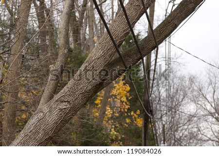 ANDOVER, NJ - OCT 30: A tree laying across three power lines over a road after Hurricane Sandy moved across the northeast in Andover, New Jersey on October 30, 2012. - stock photo