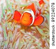 Anemone and Ocellaris clownfish close-up underwater - stock photo