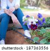 Anemone flowers - stock photo