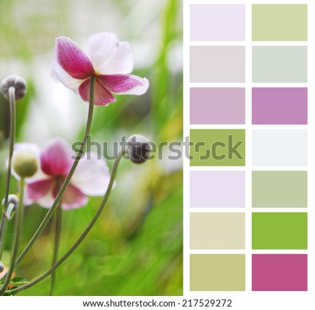 Anemone Japanese in pastel color chart palette swatches  - stock photo