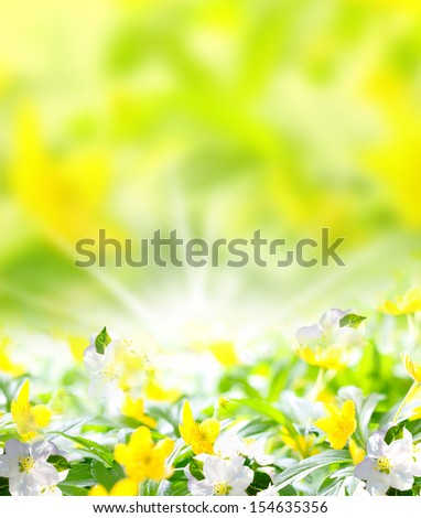 Anemones, spring-like background image - stock photo