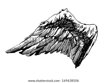 Angel Wings. Hand drawn. - stock photo