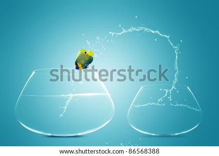 Angelfish jumping to Big bowl, Good Concept for new life, Big Opportunity, Ambition and challenge concept. - stock photo