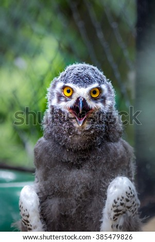Angry bird - stock photo