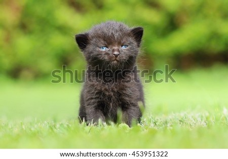 Angry black kitty